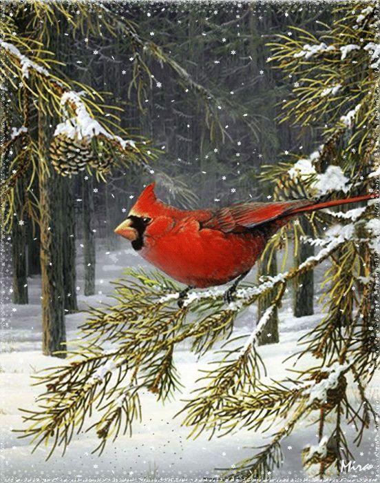 Cardenal en la nieve