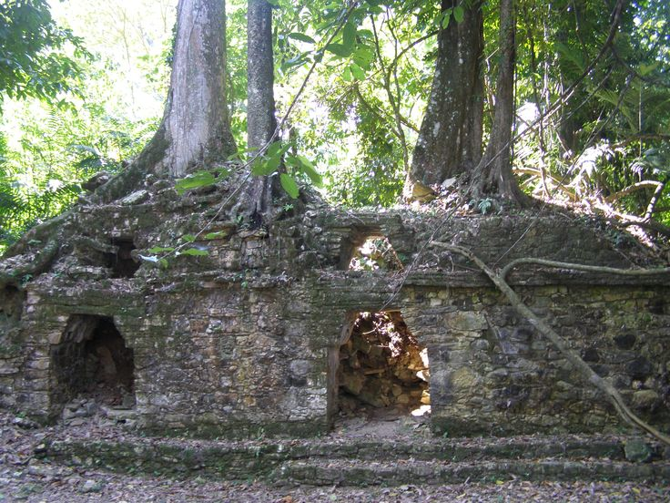 nature reclaiming ground - Mayan ruins near Palenque, Mexico