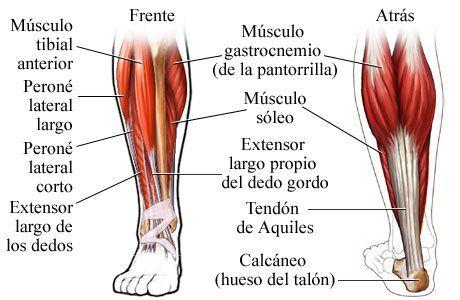 Cuando las pantorrillas duelen al caminar. Al caminar o se subir escaleras, a una distancia similar, aparece dolor a nivel de las pantorrilas o los muslos que cede cuando se descansa. Se llama Claudicación. Es por el estrechamiento de las arterias que llevan la sangre a esas zonas. Con el ejercicio, los órganos inferiores requieren más sangre, pero las arterias no tienen capacidad para aportar la necesaria. Es + frecuente en hombres, siendo + propensos los fumadores, diabéticos.