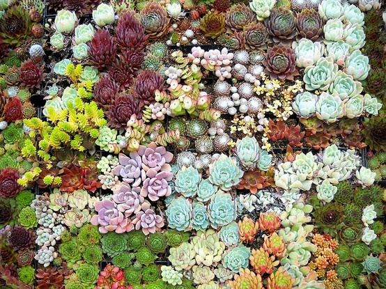 108 best california native plant design images on pinterest