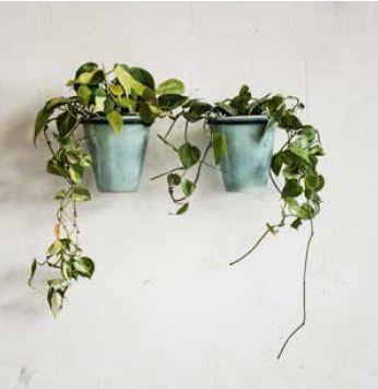 Pret a Pot Aqua Wall Planters