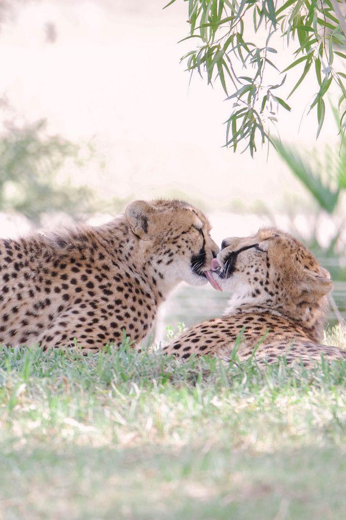 Kitty kisses by Lisa Diaz <3