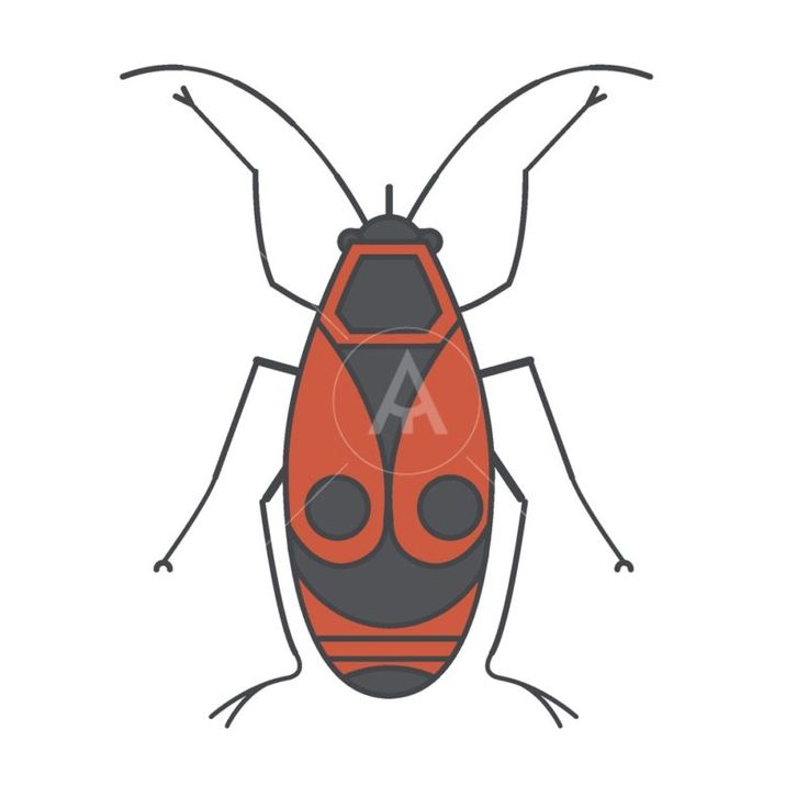 Japanese red bug