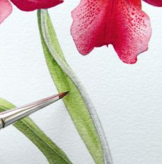 How to paint watercolour botanicals Vivian's art ideas  Peggy Mooney