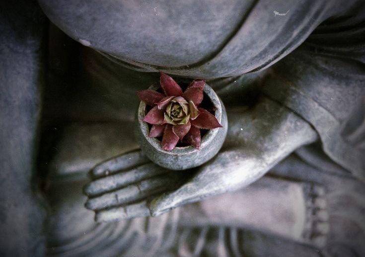 Calmer le stress par la Pleine Conscience