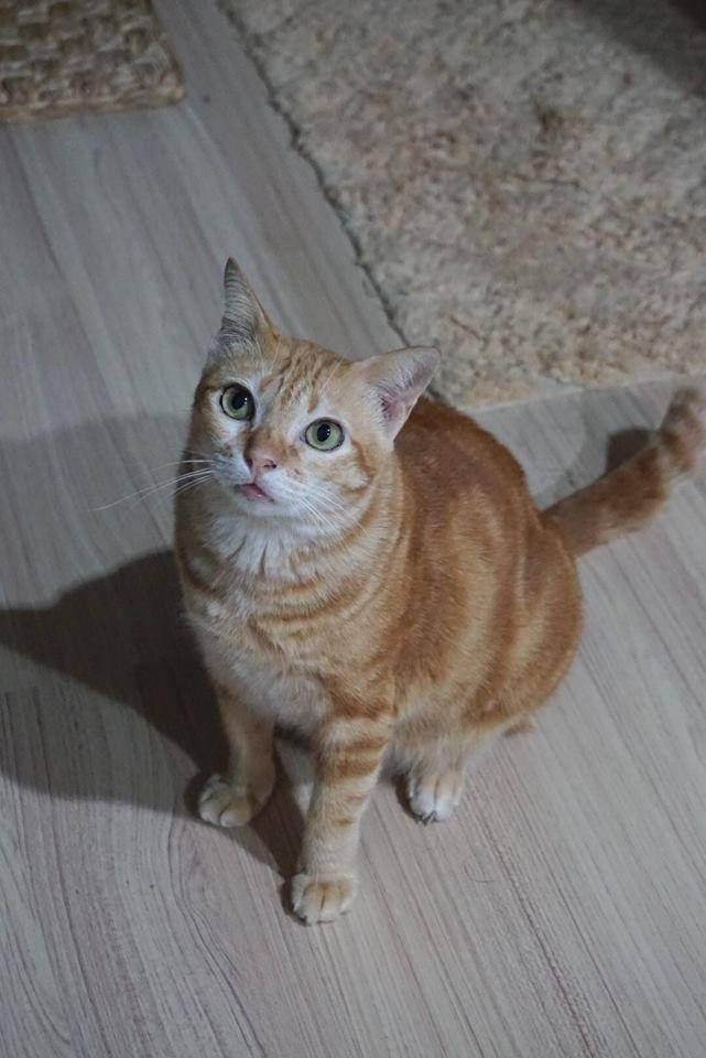 เม อมน ษย เง นเด อนพบแมวจร Pantip