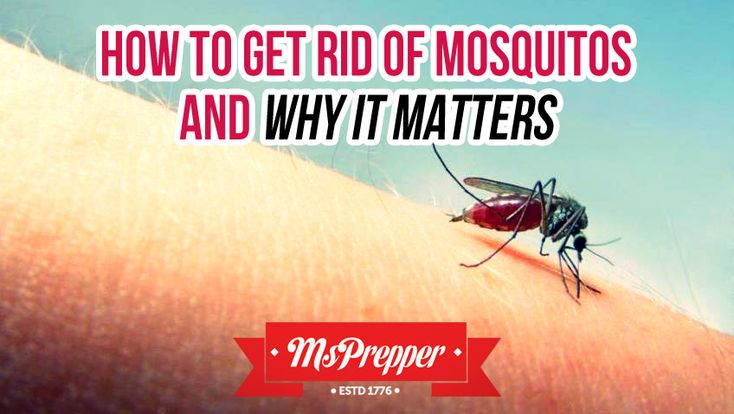 1000 Ideas About Chigger Repellant On Pinterest Chigger Bites Essential Oils And Tea Tree