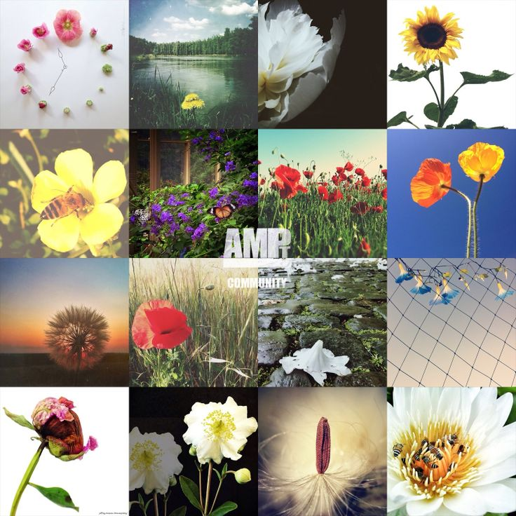 Here are some of the HIGHLIGHTS selected from the AMPt Community FLORAL Photography gallery. If you see your image here, please introduce yourself to the community and point out which image is yours.