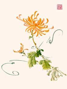 Chrysanthemum - Mum - by Nan Rae, Burbank, CA