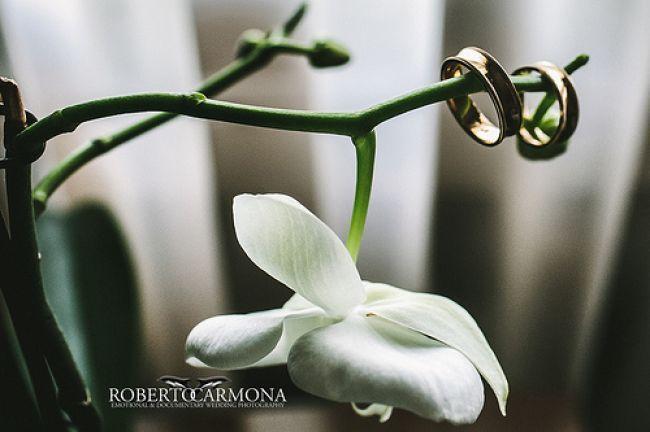 Las mejores fotografías de anillos de bodas Image: 0