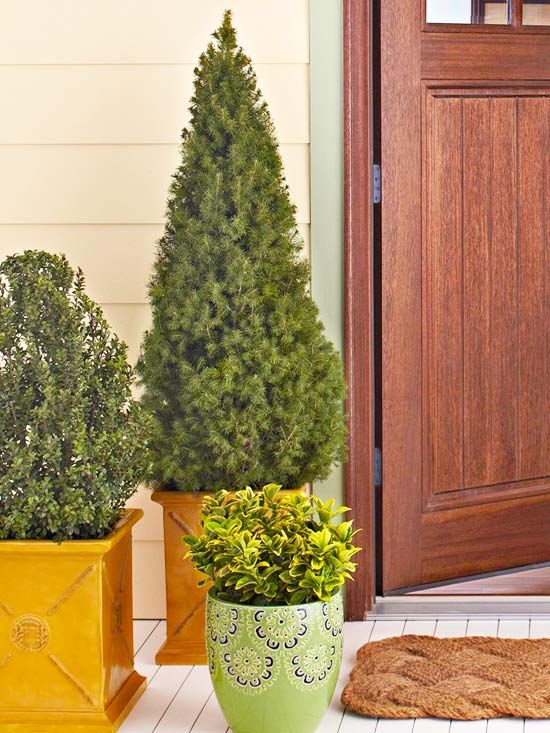 Give your entry a fresh finish by slipping evergreens and shrubs into planters. Add visual interest by varying their heights and types. For best results, transplant evergreens and shrubs in your yard before the soil freezes.