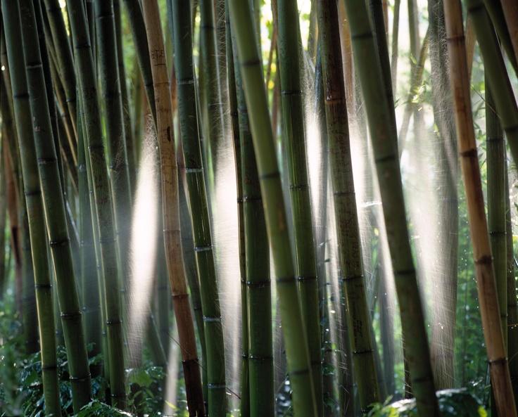 Quinta das Lágrimas, The bamboo garden
