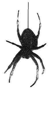 маленьком размере паук картинки анимация крест