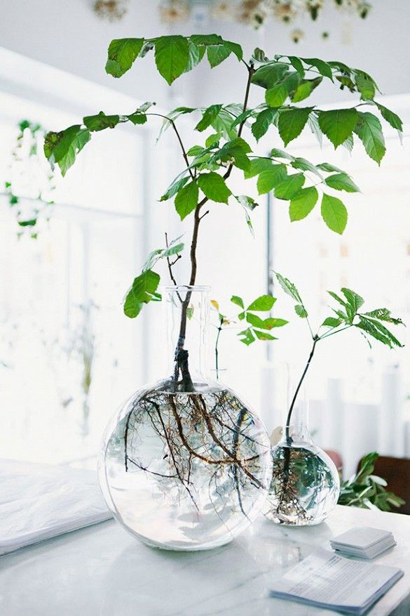 DIY Hydroponics by domainehome: Easiest houseplant ever. All you have to do is snip a certain plant at the base of a leaf and place it in fresh spring water in a glass vase—then watch as it begins to grow roots. DIY #Gardening #Houseplants #Hydroponics #Easy