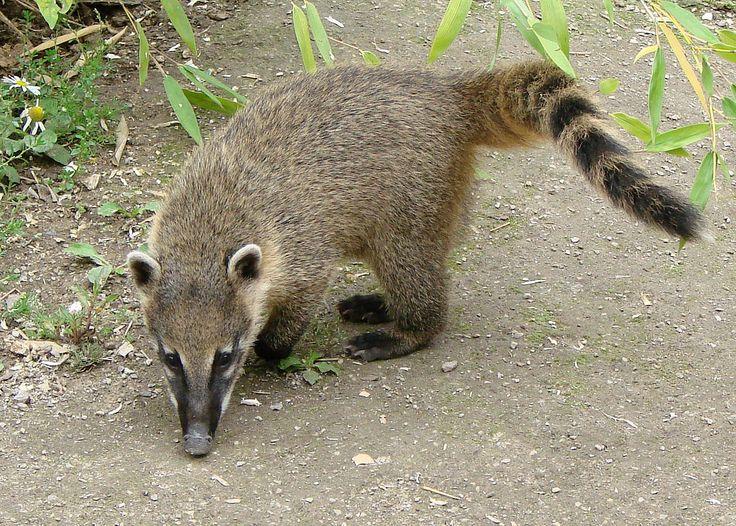 Mammals – Biopaedia