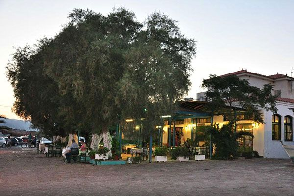 Medusa Fish Tavern, Skala Kallonis, Lesvos