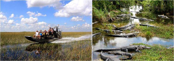 que visitar en Miami de turismo-Everglades