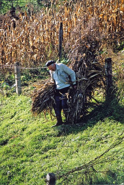 Bringing in the crops near Sigisoara, Romania.  Photo: Craig! via Flickr