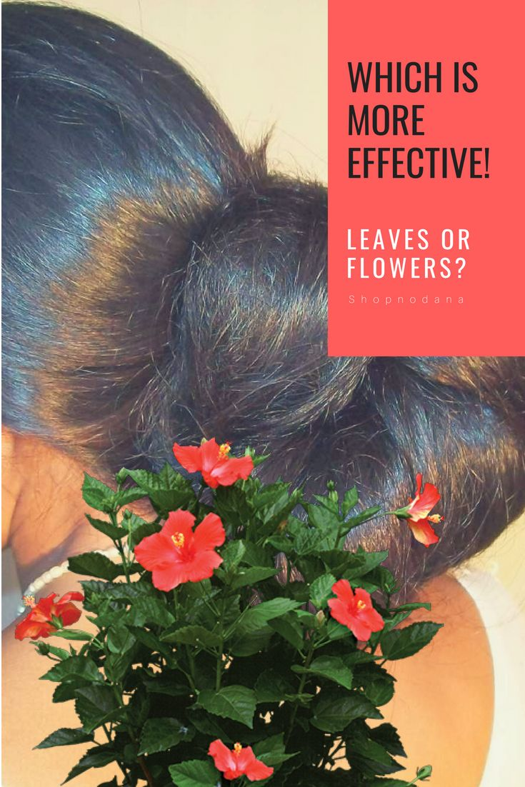 How To Use Hibiscus Flower To Get Long And Thick Hair Hair Haircare Naturalhair Healthyhair Longh Thick Hair Styles Healthy Natural Hair Hair Care Recipes