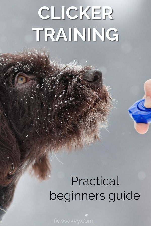 Beginners Guide To Puppy Clicker Training Dog Clicker Training