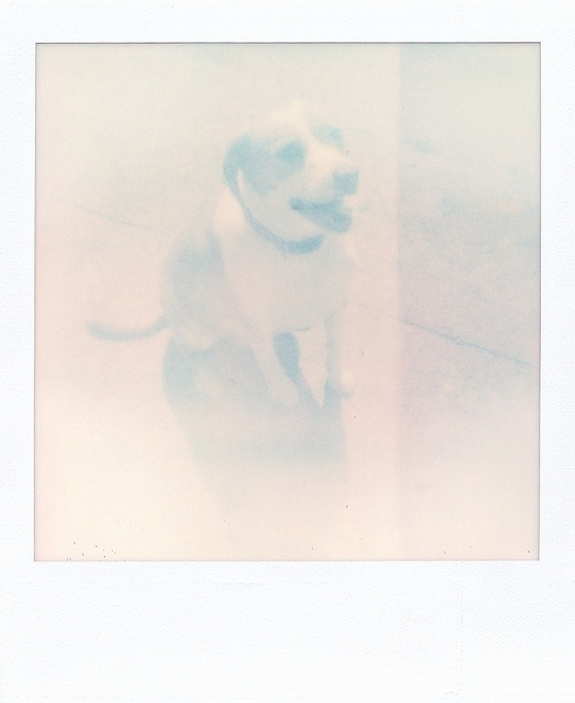 See Spot or Not | Polaroid SX70 - Impossible Project PUSH! film