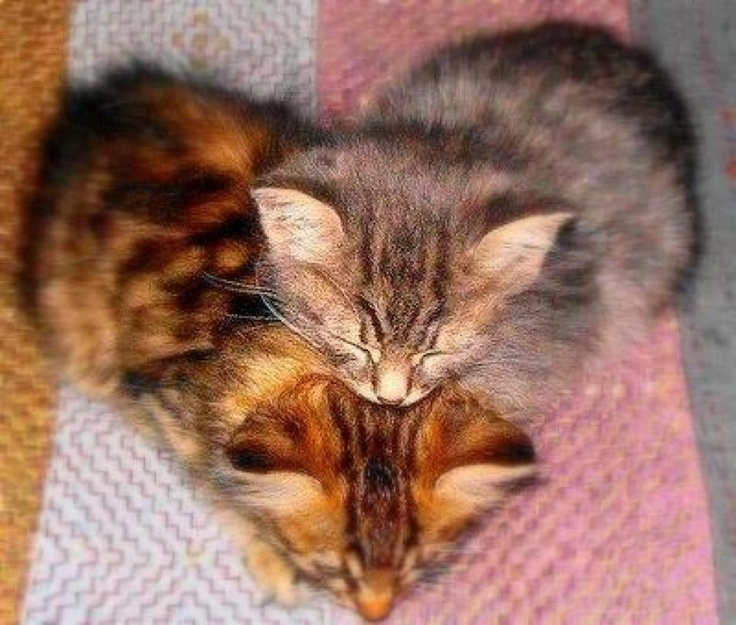 I heart kittens - Happy Valentines Day all.