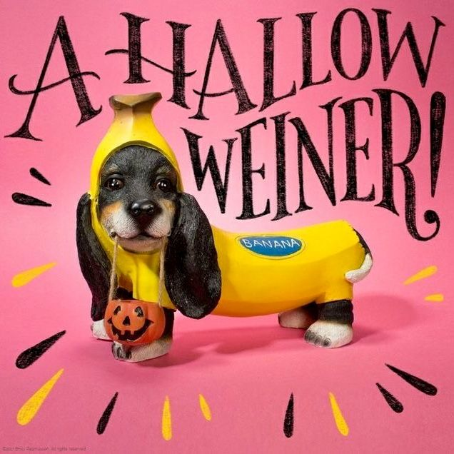 Cute Dog Pictures Image By Sandy Fry On Wiener Dogs Funny