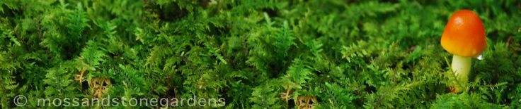 How To Grow Moss | Moss and Stone Gardens