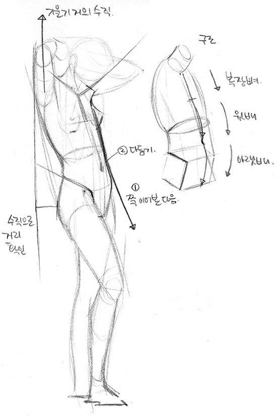 인체드로잉.해부학 수업합니다. anatomy figure drawing