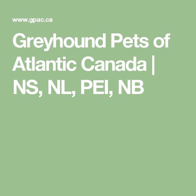 Greyhound Pets of Atlantic Canada | NS, NL, PEI, NB