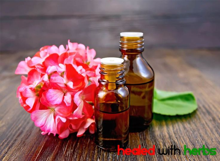 geranium essential oil is a great burn healer and scar preventative! Read more at HealedWithHerbs.com #essentialoils