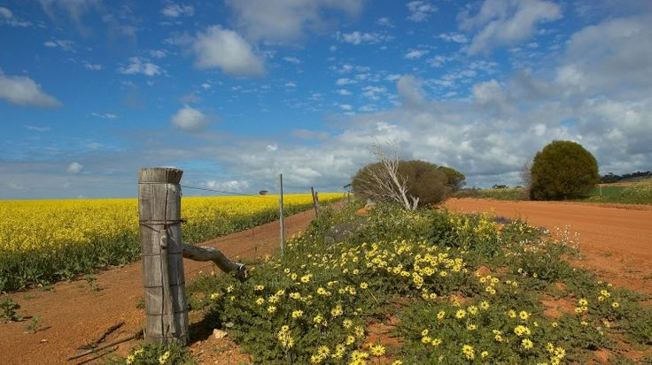 Merredin, Western Australia: Travel guide and things to do