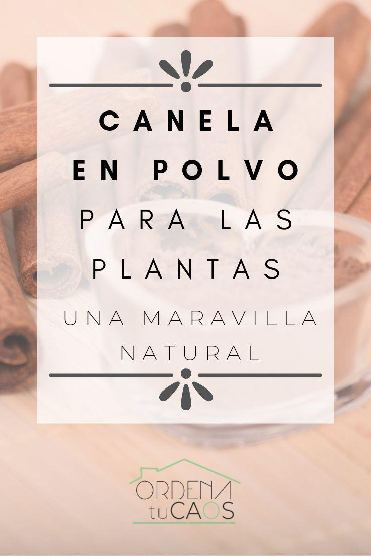 CANELA EN POLVO PARA LAS PLANTAS