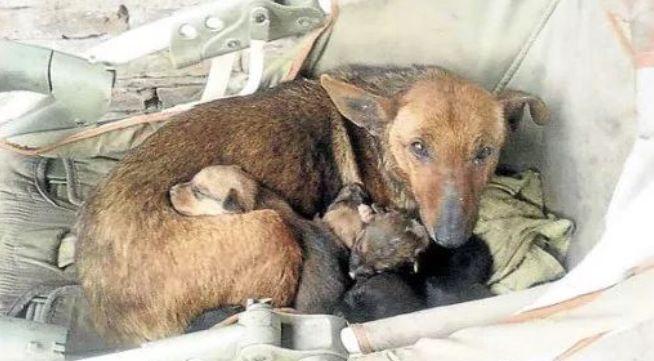Hundemutter rettet Baby vor dem Erfrieren