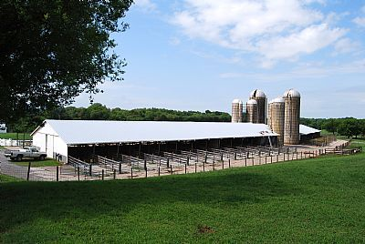 Best 25 Cattle Barn Ideas On Pinterest Horse Barns