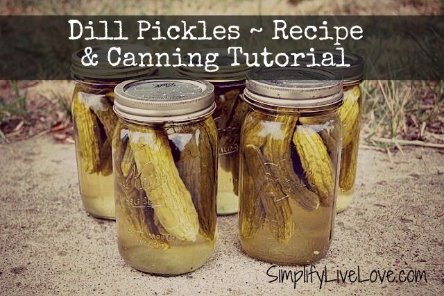Grandma's Secret Dill Pickle Recipe & Canning Tutorial. THE perfect recipe for spicy, crunchy garlic dill pickles. You won't be disappointed.