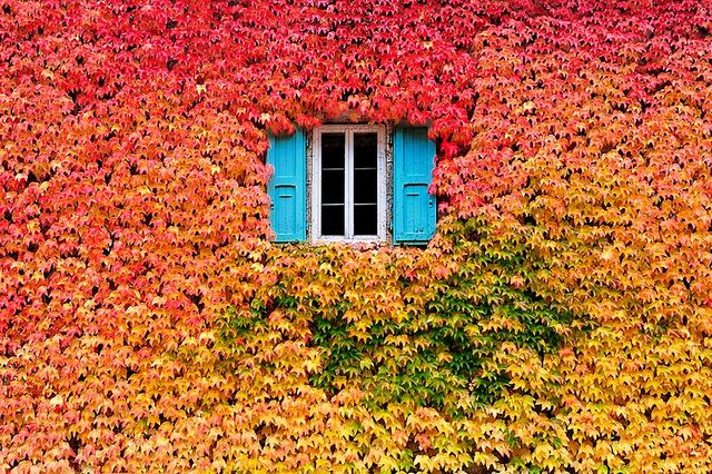 Just stop. I mean. Shut up. Seriously?    A Wall Of Fall by Kala___, via Flickr