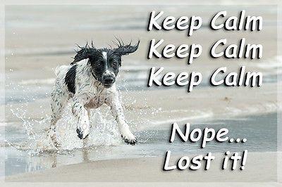 Sprocker Springer Spaniel Dog Funny Fridge Magnet Keep Calm Gift New in Collectables, Animals, Dogs | eBay