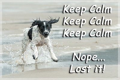Sprocker Springer Spaniel Dog Funny Fridge Magnet Keep Calm Gift New in Collectables, Animals, Dogs | eBay