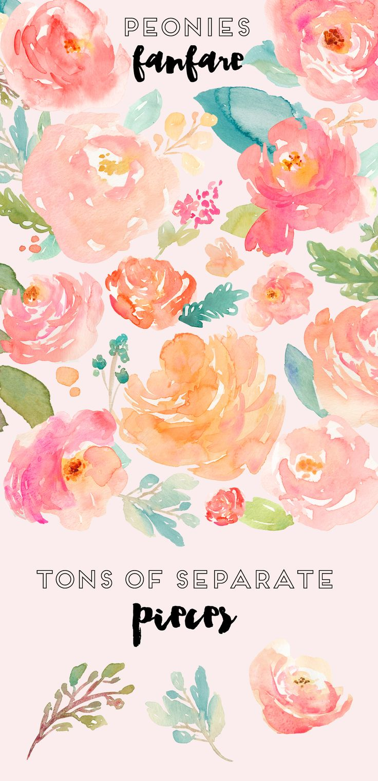 Peonies Fanfare- Watercolor Clip Art by Angie Makes on Creative Market