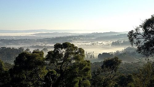 It was a lovely #Melbourne winter morning today with a warm sun ticking over the valley filled with mist.