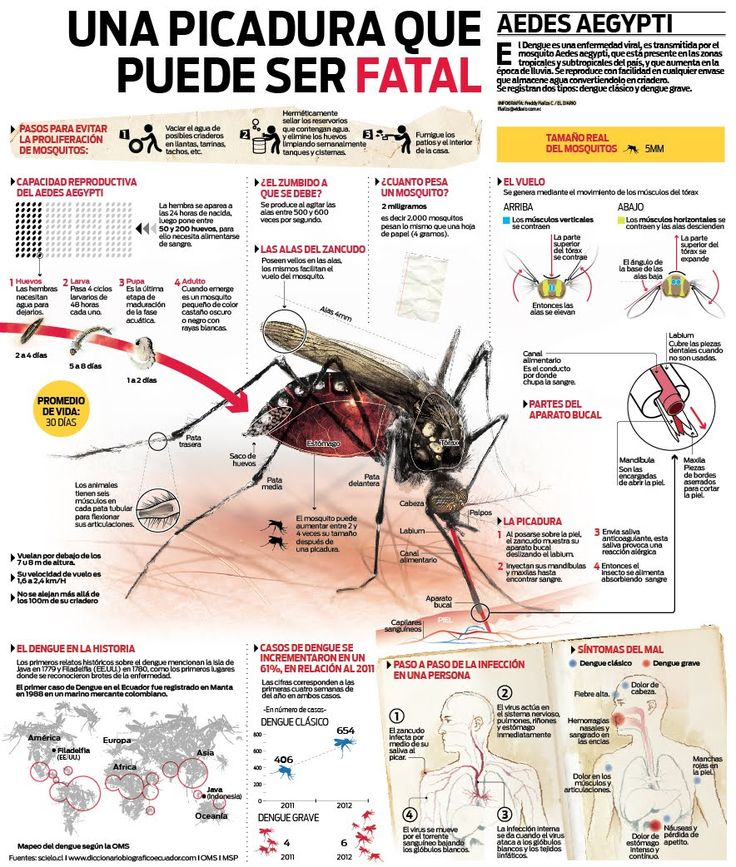 Mosquitos - Dengue - Una picadura que puede ser fatal Check out the website to see more