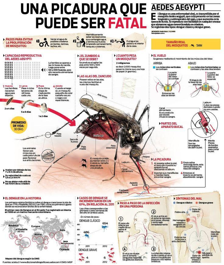 El Dengue es una enfermedad infecciosa aguda, de origen vírico y muy parecida a la gripe. También se conoce con los nombres de fiebre roja, fiebre rompehuesos y fiebre solar. El agente que produce ...