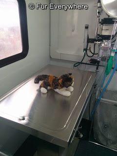 Fur Everywhere: Meow Mobile Offers Subsidized Spay/NeuterSurgerie... #cats #spay #neuter #Denver
