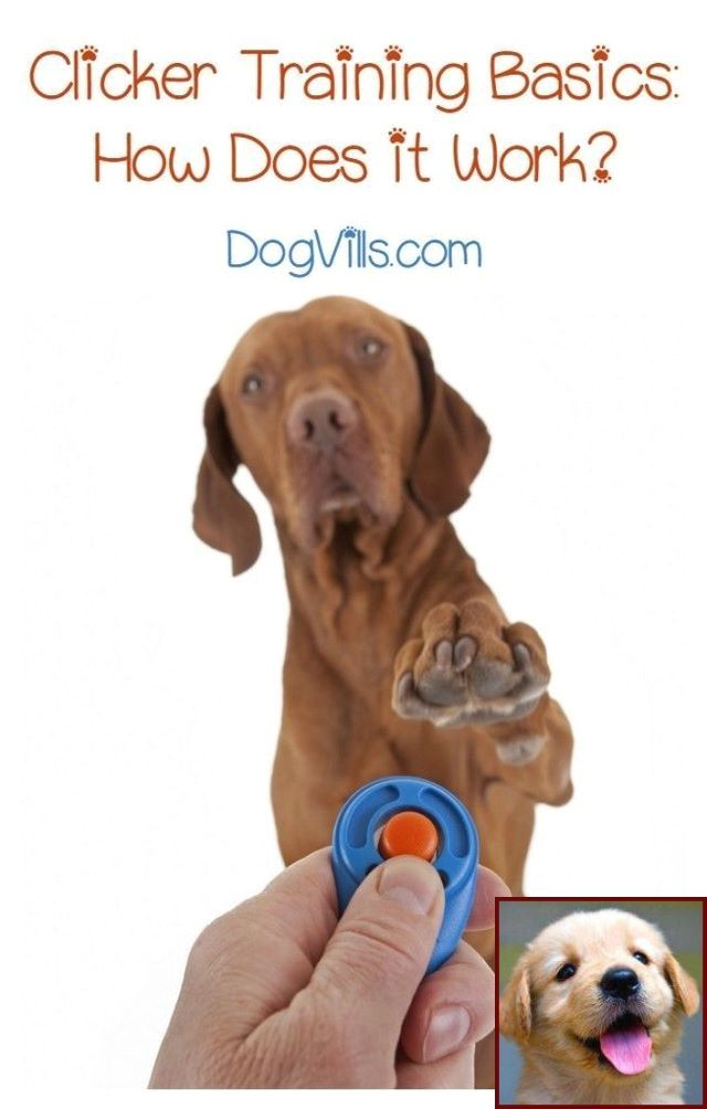 House Training A Puppy In An Apartment And Clicker Training Dogs