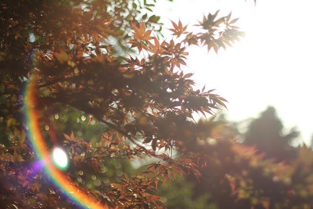 IMG_2499 by TokyoShowdown, via Flickr