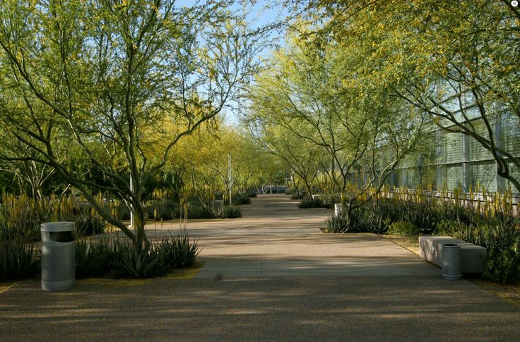 Ten eyck landscape architects biodesign arizona city for Ten eyck landscape architects