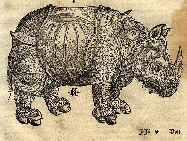 Rhinoceros by Albrecht Durer.  My favorite print from the Northern Renaissance.