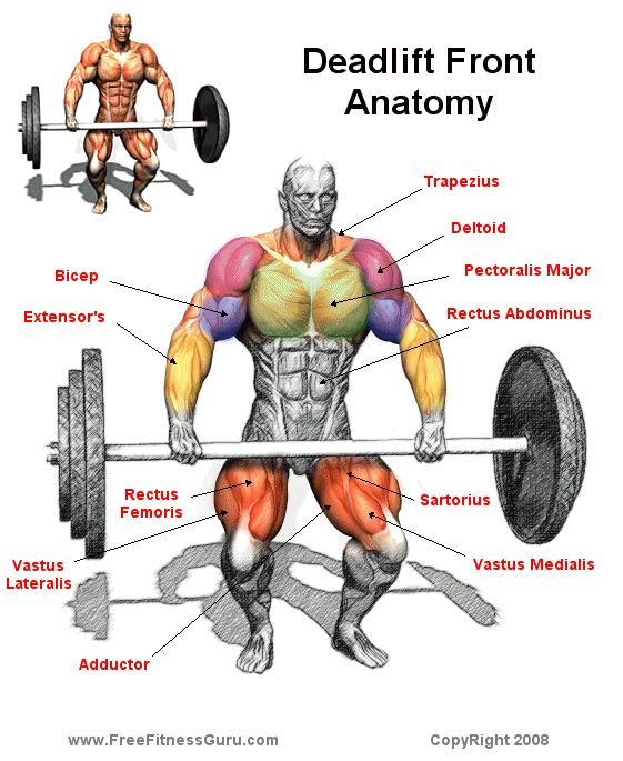 Deadlifts Work Front Muscles Too | Shredzzz | Pinterest ...