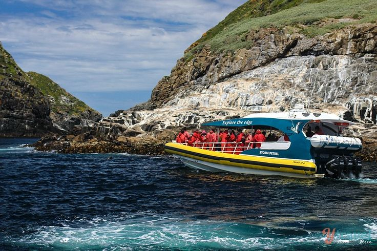 3 Hours of Unspoilt Wilderness on a Bruny Island Cruise in Tasmania